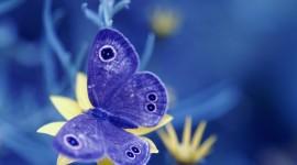Butterfly Macro Photo