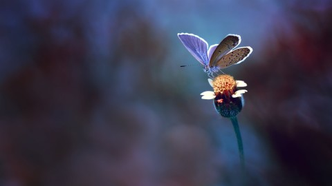 Butterfly Macro wallpapers high quality