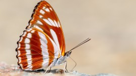 Butterfly Macro Wallpaper Download
