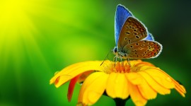 Butterfly Macro Wallpaper For Desktop