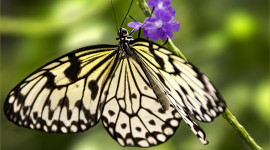 Butterfly Macro Wallpaper Free