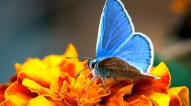 Butterfly Macro Wallpaper Gallery