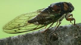 Cicadas Best Wallpaper