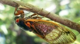 Cicadas Desktop Wallpaper