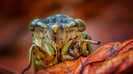 Cicadas Desktop Wallpaper HD