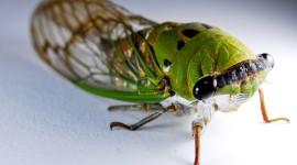 Cicadas Desktop Wallpaper HQ