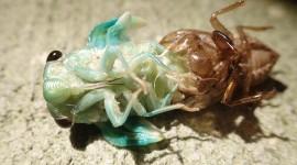 Cicadas High Quality Wallpaper