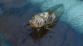 Cicadas Wallpaper 1080p