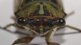 Cicadas Wallpaper