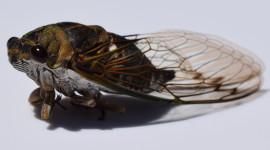 Cicadas Wallpaper Background