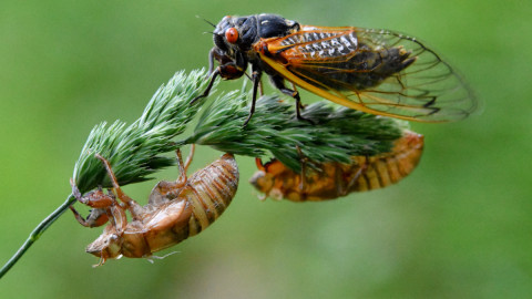 Cicadas wallpapers high quality