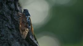 Cicadas Wallpaper For PC