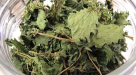 Dried Nettle Desktop Wallpaper