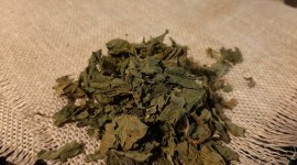 Dried Nettle Photo