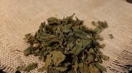 Dried Nettle Photo