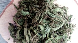 Dried Nettle Photo Download