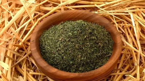 Dried Nettle wallpapers high quality