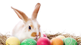 Easter Bunny Aircraft Picture