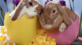 Easter Bunny Desktop Wallpaper For PC