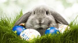 Easter Bunny Desktop Wallpaper HD
