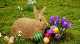 Easter Bunny Photo Download