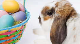 Easter Bunny Photo Free