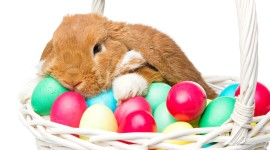 Easter Bunny Picture Download