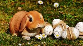 Easter Bunny Wallpaper