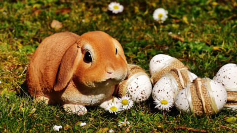 Easter Bunny wallpapers high quality