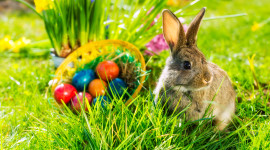 Easter Bunny Wallpaper Download