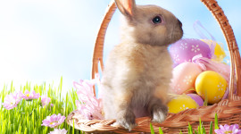 Easter Bunny Wallpaper For IPhone