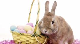 Easter Bunny Wallpaper For PC
