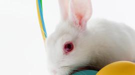 Easter Bunny Wallpaper Full HD