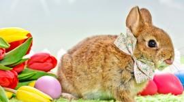 Easter Bunny Wallpaper Gallery