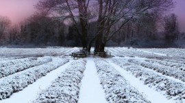 Field First Snow Wallpaper For IPhone