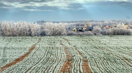 Field First Snow Wallpaper For PC