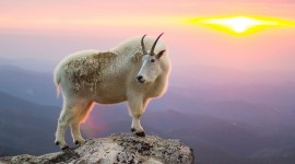 Goat Wallpaper Download Free
