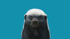 Honey Badger Wallpaper 1080p