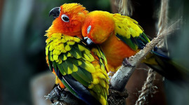 Love Birds Wallpaper Download Free