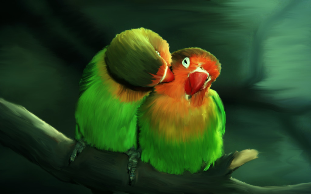 Love Birds wallpapers HD