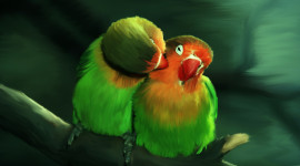 Love Birds Wallpaper Full HD