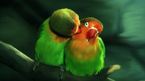 Love Birds wallpapers high quality