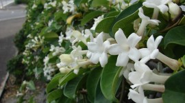 Madagascar Jasmine Aircraft Picture