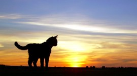 Sunset Cat Aircraft Picture