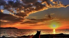 Sunset Cat Desktop Wallpaper For PC