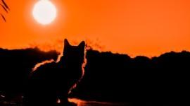 Sunset Cat Desktop Wallpaper HD