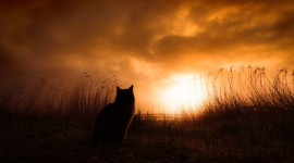 Sunset Cat Image