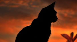 Sunset Cat Photo Download