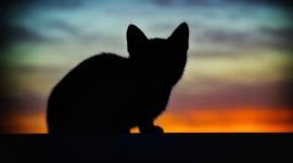 Sunset Cat Photo Free