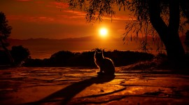 Sunset Cat Picture Download